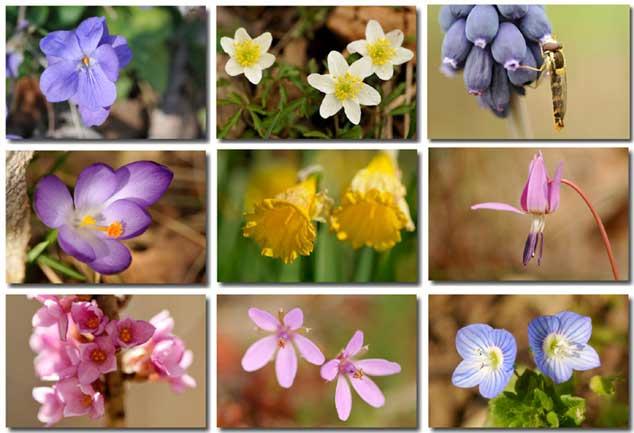 fleurs du mois de mars